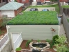 green-roof[2]